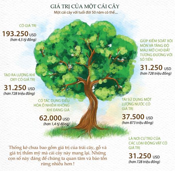 Giá trị của cây xanh