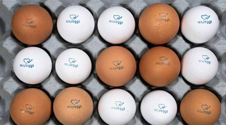 Đối với loài gà, người ta lại siêu âm để lựa chọn gà mái.