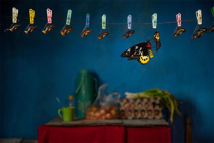 Một con bướm hiếm