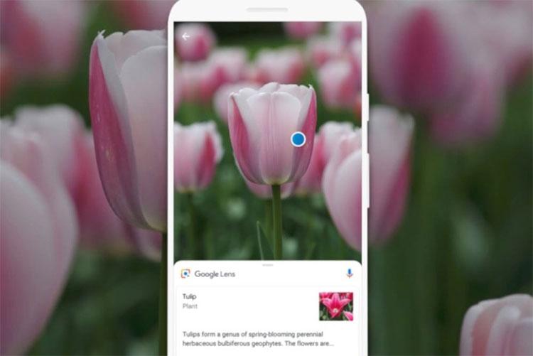 Không chỉ là ảnh chụp, Google Lens có thể nhận biết vật thể theo thời gian thực.