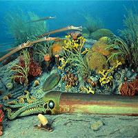 Nguy cơ về cuộc đại tuyệt chủng thứ 6 trên Trái đất