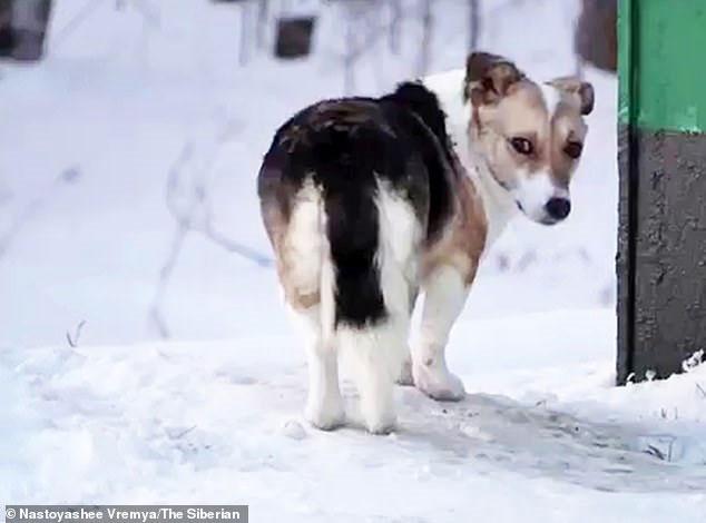 Chú chó trung thành đã bị bỏ rơi từ mùa hè