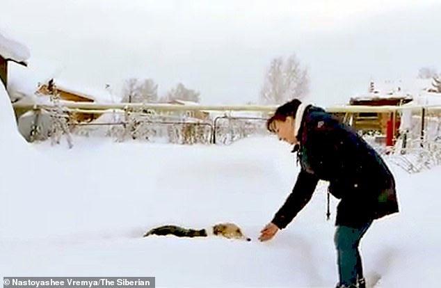 Tại mái ấm mới vào đúng dịp Giáng sinh, chú chó trung thành đã có thêm 2 người bạn mới là 1 chú mèo và 1 chú chó