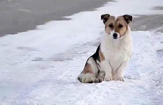 Chú chó trung thành đợi chủ quay trở lại dưới thời tiết lạnh giá.