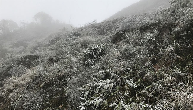 Vùng núi cao phía Bắc có khả năng xuất hiện mưa tuyết và băng giá trong 2 ngày 29 - 30/12.