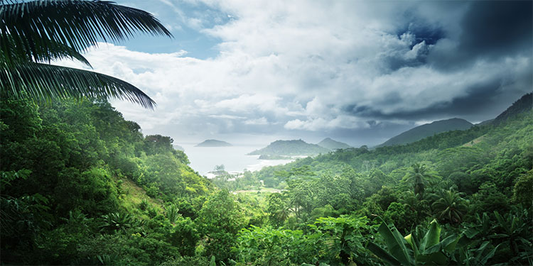 Rừng nhiệt đới chắc chắn có một cơ chế ngăn chặn sự chiếm ưu thế và thống trị của một loài cây duy nhất