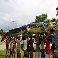 """Những """"kẻ khổng lồ"""" trong thế giới động vật"""