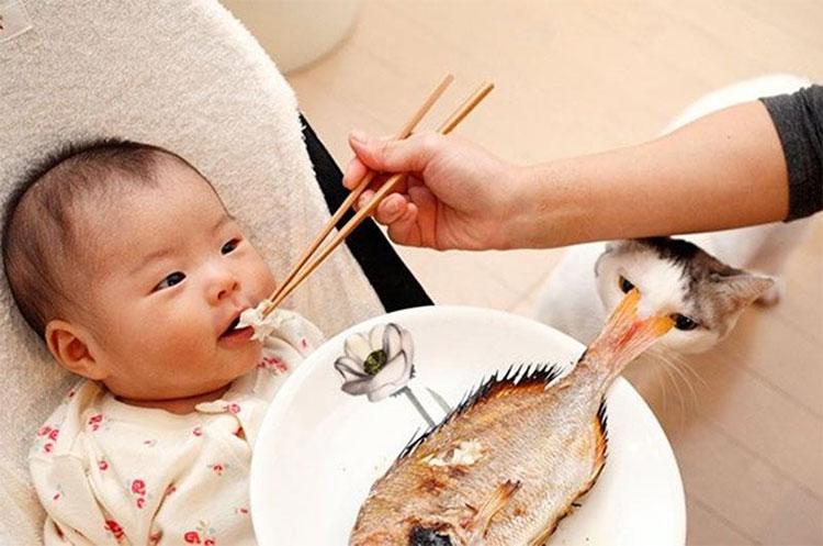 Cho tre ăn hải sản