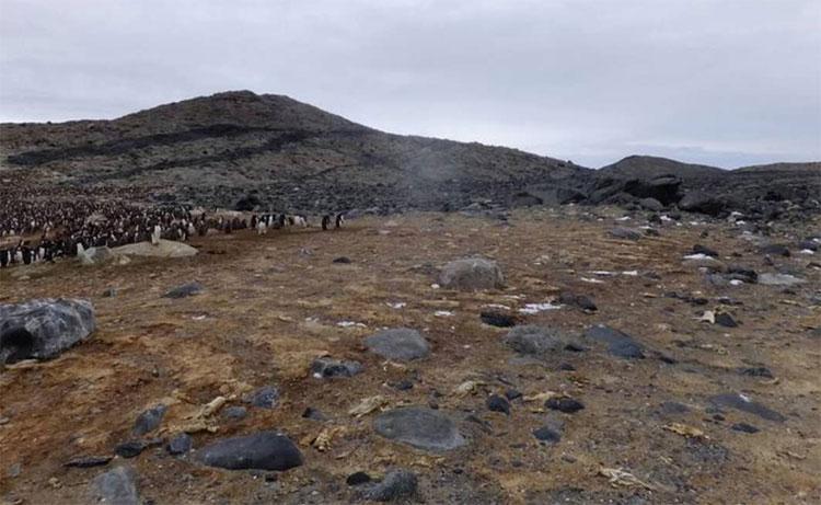 Bãi tha ma chim cánh cụt với hàng trăm xác ướp bí ẩn có niên đại 200 hoặc 750 năm.