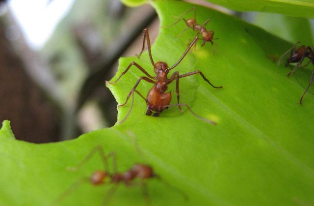 Loài kiến để lại lượng lớn khí thải ngoài môi trường