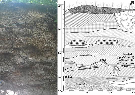 Những điểm trắng li ti trong đất mộ cổ chính là vỏ sò, ốc và các loài nhuyễn thể khác