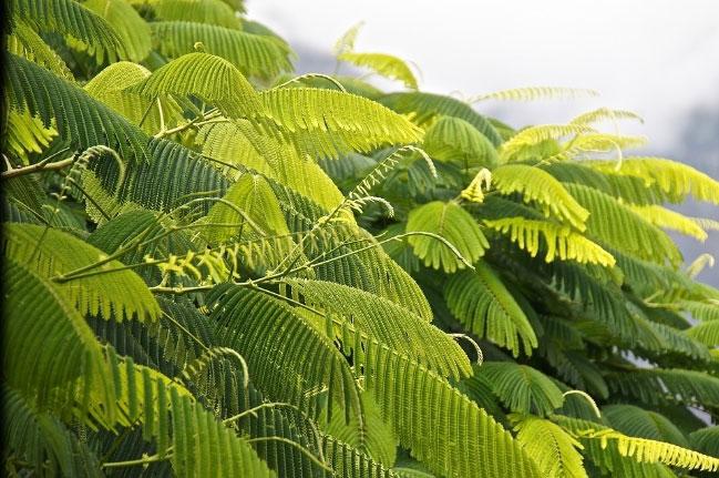 Enzyme Rubisco có trong lá của tất cả các loài thực vật và được coi là enzyme gần phổ biến nhất trên hành tinh.