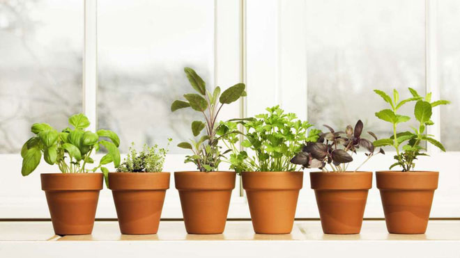 """Cây cối có thể """"xì hơi"""", nhưng theo cách của thực vật."""