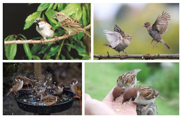 Cả chim sẻ đực và cái đều luôn nghi ngờ nhau cho đến trọn kiếp.