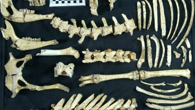 Các mẫu hóa thạch tìm được.