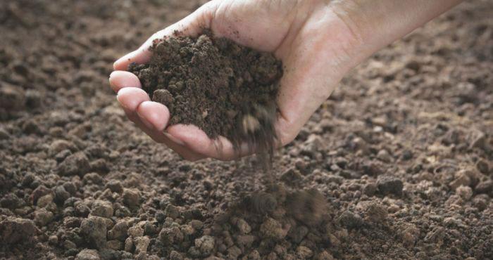 Đất tại Fermanagh chứa một loại vi khuẩn có khả năng diệt siêu vi đa kháng thuốc