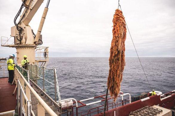 """Tấm lưới cá thứ 3 được Ocean Cleanup """"tóm"""" được trong 2 tháng thử nghiệm"""
