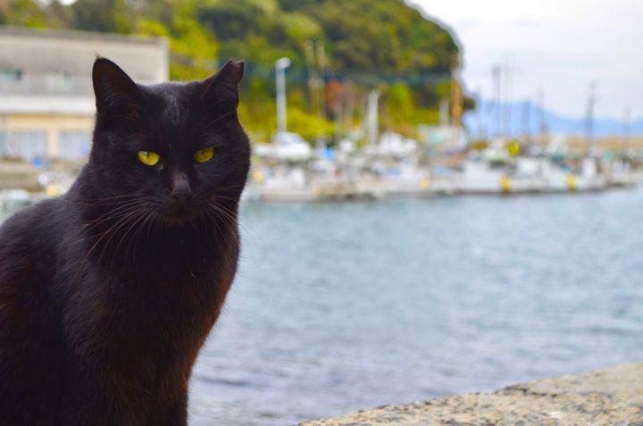 Người Scotland từ lâu đã tin rằng mèo đen xuất hiện sẽ mang đến sự thịnh vượng cho gia chủ.