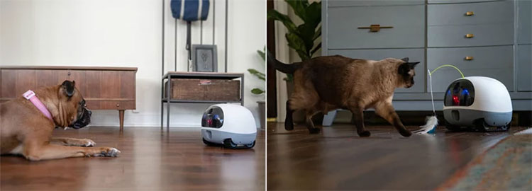 Robot có thể cho ăn hoặc chơi đùa với vật nuôi nếu người dùng kích hoạt chế độ này trên ứng dụng.