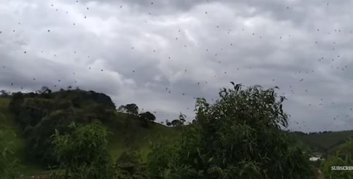 Hàng trăm con nhện treo lơ lửng trên không trung.