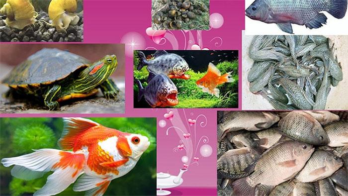 Sinh vật ngoại lai xâm hại nguy hiểm, đe dọa đối với sản xuất nông nghiệp, môi trường và đa dạng sinh học.