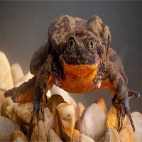 """Cuối cùng thì chú ếch cô đơn nhất thế giới đã tìm được """"bạn gái"""""""