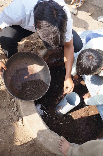 Giun hổ được chứa phía dưới nhà vệ sinh sẽ xử lý phân và thải ra phân hữu cơ