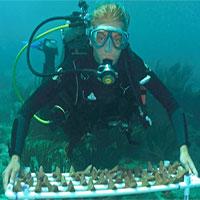 Bong bóng bê tông hứa hẹn giúp phục hồi rạn san hô nhanh hơn