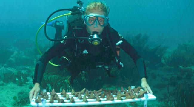 Rạn san hô có thể phục hồi nhanh chóng và dễ dàng như việc gieo hạt trong vườn.