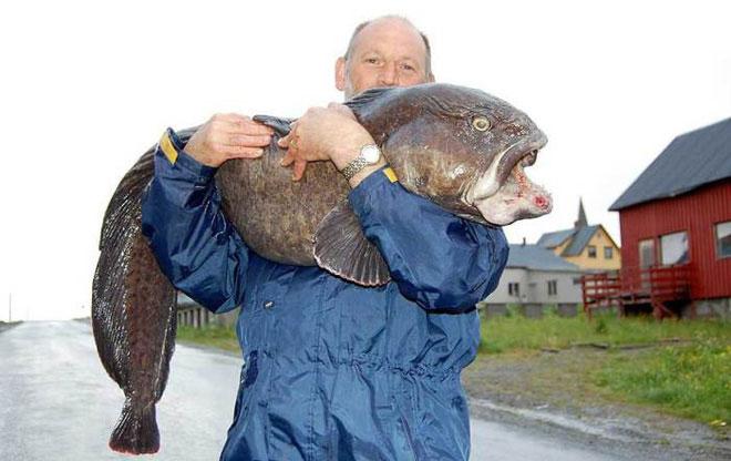 Con cá sói này nặng tới 22kg.