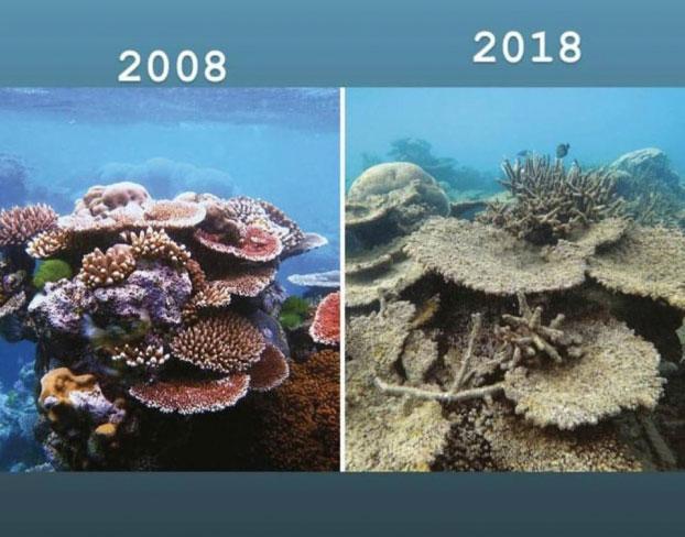 Những rạn san hô biến mất