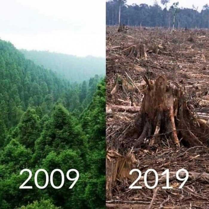 Những cánh rừng biến mất...