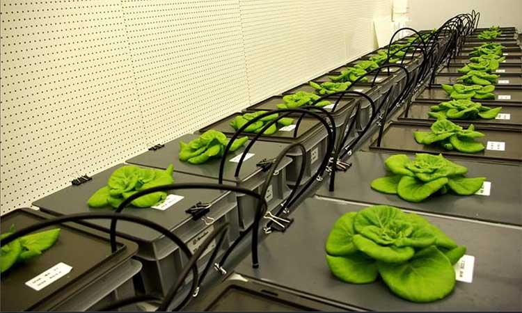 Không lâu nữa, các phi hành gia sẽ có nguồn cung cấp thực phẩm đa dạng hơn.