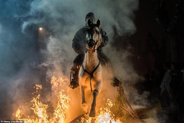 Điều khiển ngựa nhảy qua đống lửa là nghi thức quan trọng nhất tại lễ hội có truyền thống suốt 500 năm
