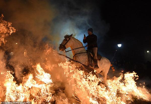 Ngay trước khi nghi thức diễn ra, người dân làng sẽ bảo vệ những chú ngựa bằng cách tưới nước, bọc kín đuôi và tết bờm để ngăn chúng không bắt lửa