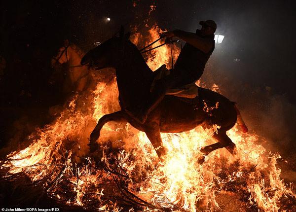 ngựa là loài động vật đặc biệt nhạy cảm với bản năng tự nhiên luôn né tránh những đống lửa lớn