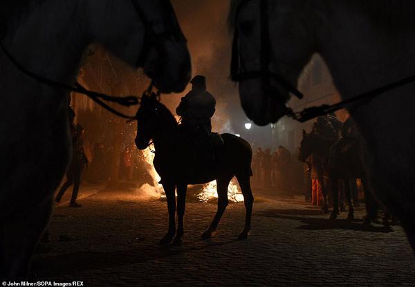"""""""Las Luminarias"""" là một trong nhiều lễ hội có sự tham gia của động vật tại Tây Ban Nha"""