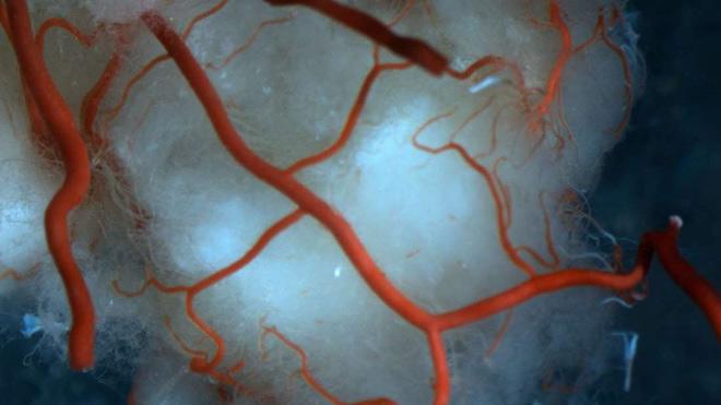 Mạch máu mới được tạo ra từ tế bào gốc