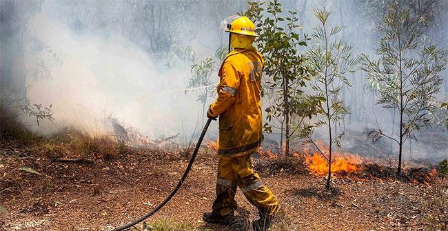 Nắng nóng kỷ lục cũng tạo ra cháy rừng trên diện rộng.