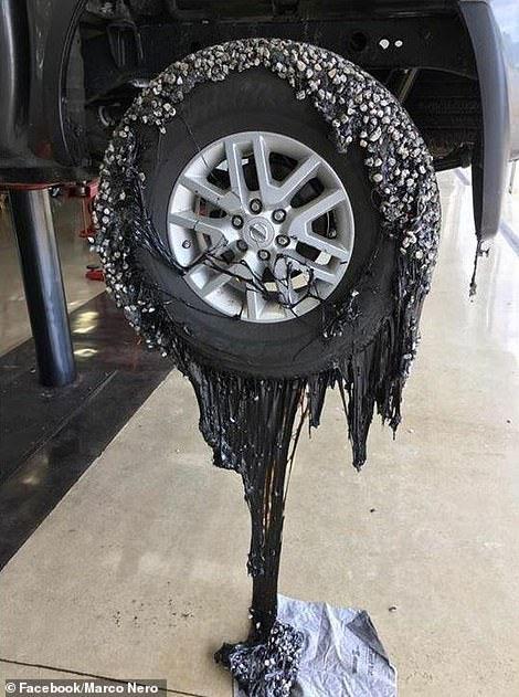 Nắng nóng kỷ lục khiến nhựa đường bám vào lốp xe.