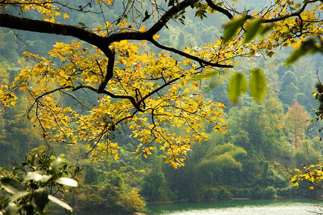 Những tán lá phong chuyển sang vàng rồi đỏ, hồ nước xanh trong như ngọc