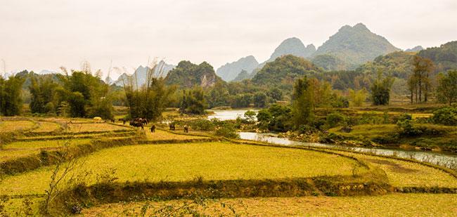 Ruộng lúa ở Cao Bằng