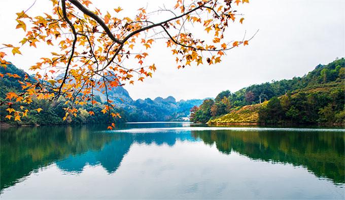 Hình ảnh rừng cây thay lá ở vùng đất Trùng Khánh, Cao Bằng
