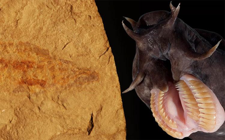 Hoá thạch của loài cá mù cổ đại mới được phát hiện.