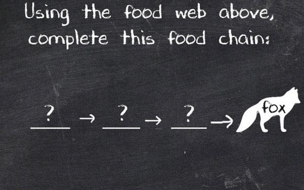 Thứ tự đúng của chuỗi thức ăn này là gì?
