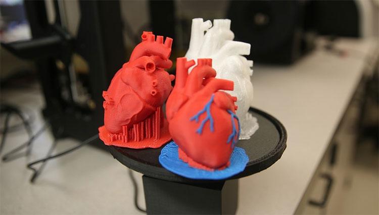 Những quả tim được in 3D được kỳ vọng sẽ phù hợp với mọi bệnh nhân.