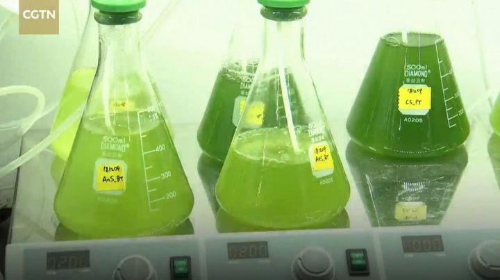 Khí tạo ra từ chất thải có thể sử dụng để tinh chế dầu diesel sinh học.