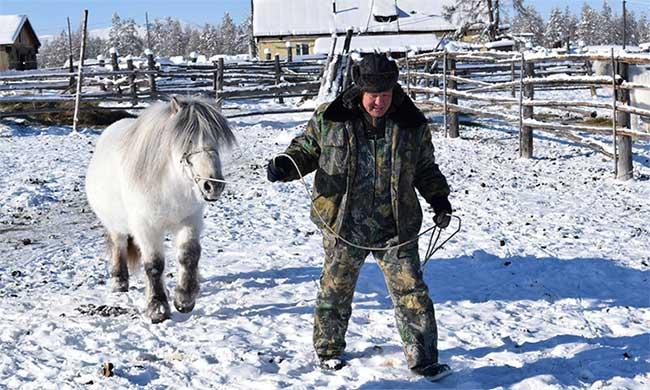 Mikhail Etigelow, 56 tuổi, ở Oymyakon, Nga, cùng con trai và anh rể, quản lý 100 con ngựa của gia đình