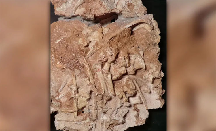 Hoá thạch của loài thằn lằn cổ đại mới được phát hiện.