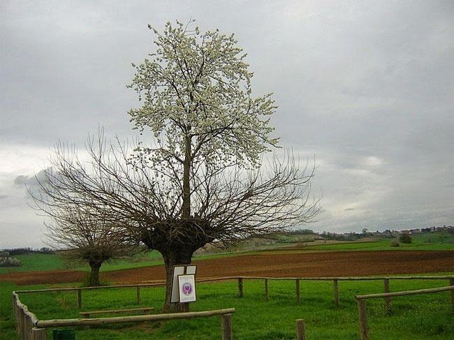 Sự đối lập và thú vị rất hiếm có của hai cây.